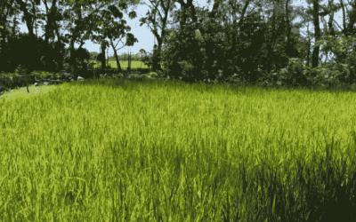Nursing the Environment: SPUQC Counts the Ways